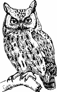 Owls are the quintessential image for the night person