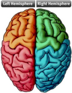 Left and right brain hemispheres with coloured quadrants