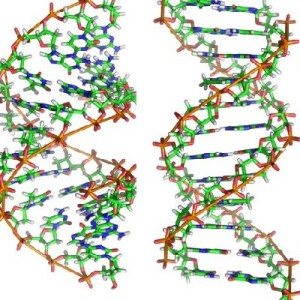 Colourful strands of DNA